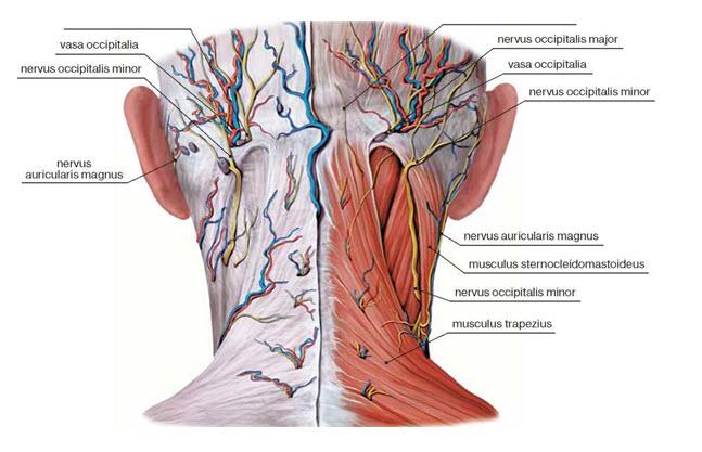 Блокада нерва при мигрени - Мигрень